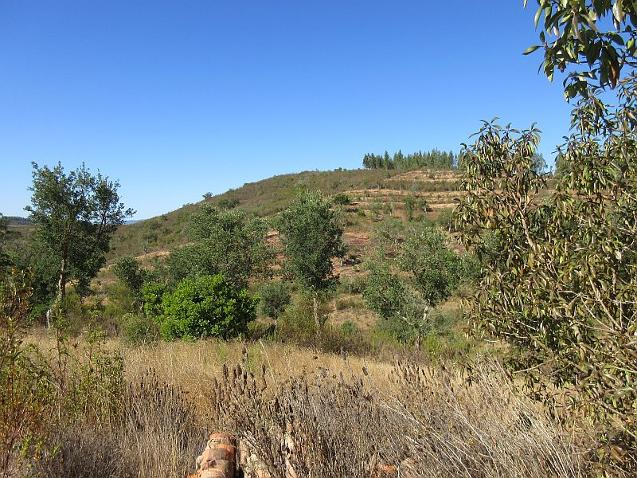 land and house for sale Pereiras